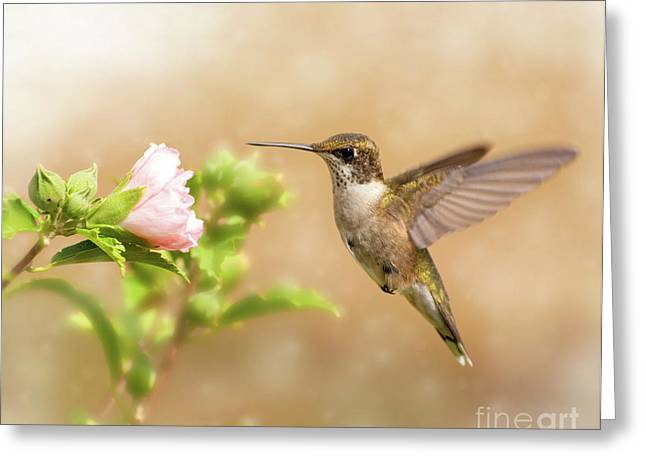 Hummingbird Hovering Greeting Card by Sari ONeal