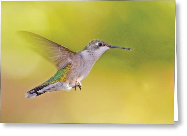 Birds Pyrography Greeting Cards - Hummingbird in Green Greeting Card by Don Wolf