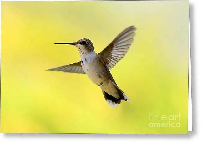Flying Bird Greeting Cards - Hummingbird in Yellow Greeting Card by Carol Groenen