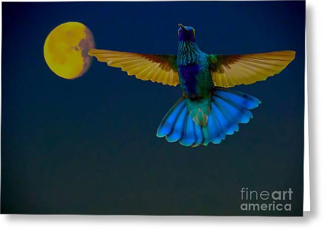 Hummingbird Moon Greeting Card by Al Bourassa