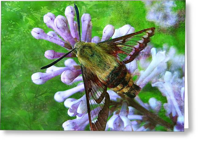 Light Grey Greeting Cards - Hummingbird Moth Greeting Card by Shirley Sirois