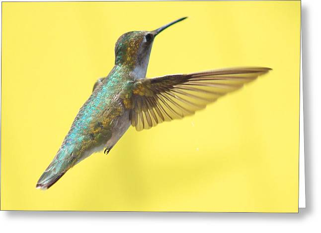 Yellows Greeting Cards - Hummingbird on Yellow 3 Greeting Card by Robert  Suits Jr