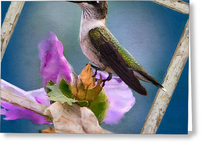 Rose Of Sharon Greeting Cards - Hummingbird Picture Pretty Greeting Card by Betty LaRue