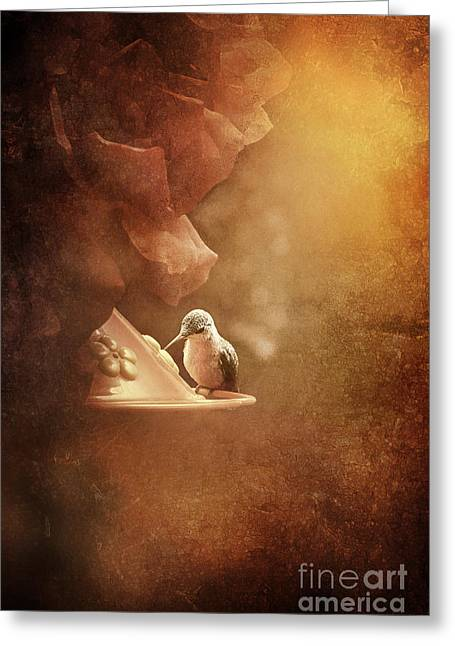 Idaho Greeting Cards - Hummingbird Resting in Golden Light Greeting Card by Cindy Singleton