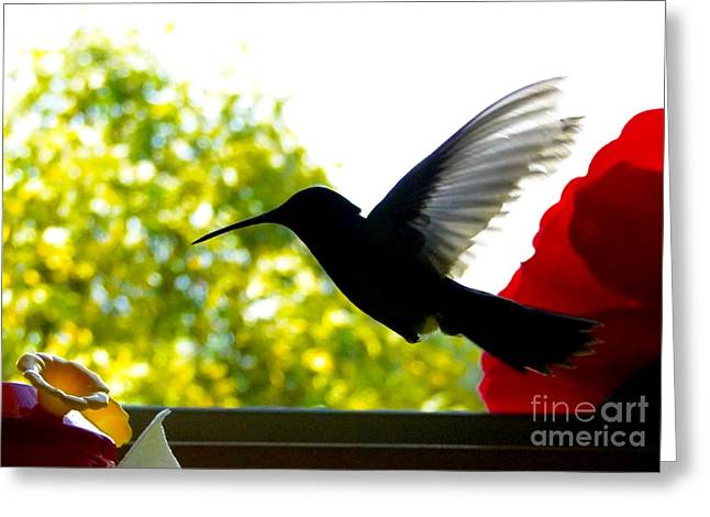 Flyer Greeting Cards - Hummingbird Series 11 Greeting Card by Al Bourassa