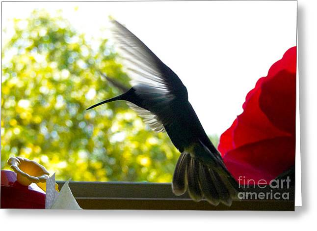 Hovering Greeting Cards - Hummingbird Series 12 Greeting Card by Al Bourassa