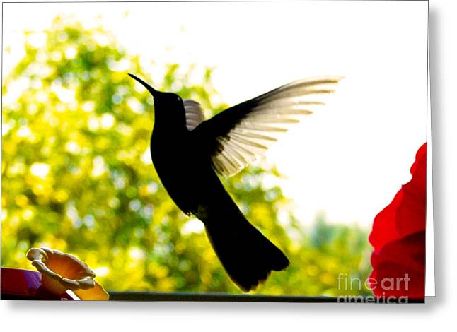 Flyer Greeting Cards - Hummingbird Series 14 Greeting Card by Al Bourassa