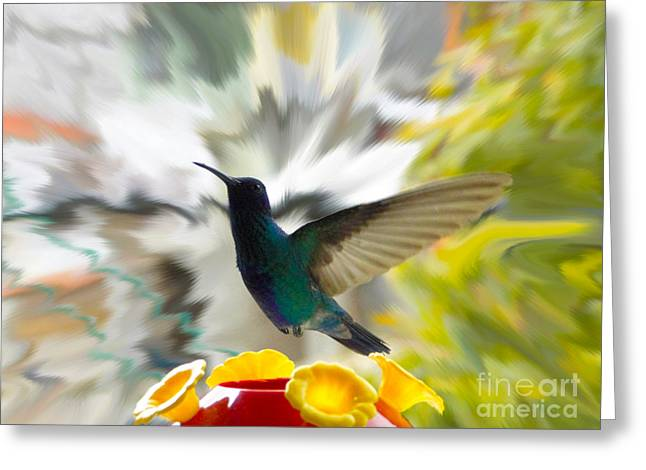 Flyer Greeting Cards - Hummingbird Series 9 Greeting Card by Al Bourassa