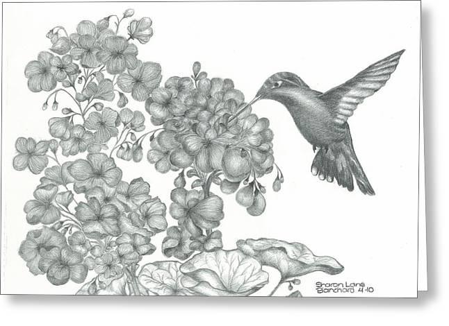 Flying Animal Drawings Greeting Cards - Hummingbird  Greeting Card by Sharon Blanchard
