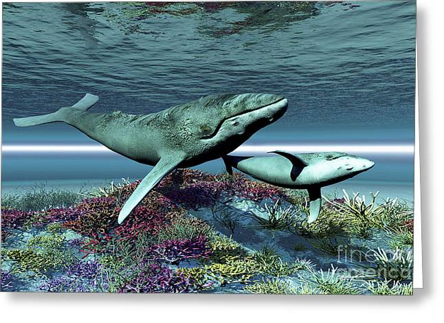 Caring Mother Digital Greeting Cards - Humpback Whale Mother And Calf Swim Greeting Card by Corey Ford