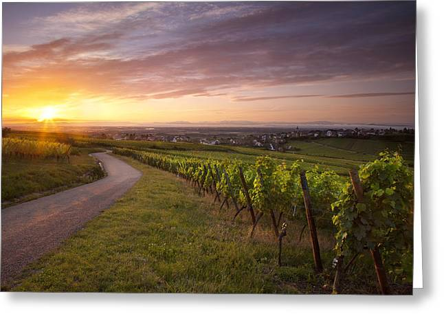 Route Des Vins Greeting Cards - Hunawihr Alsace Greeting Card by Brian Jannsen