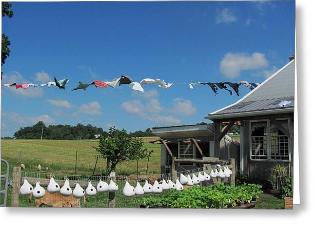 Amish Photographs Greeting Cards - Hung Out To Dry Greeting Card by Renee Holder