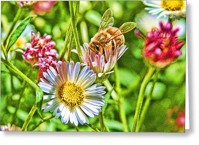 Altered Photograph Greeting Cards - Hungry Bee Greeting Card by Danielle Miller