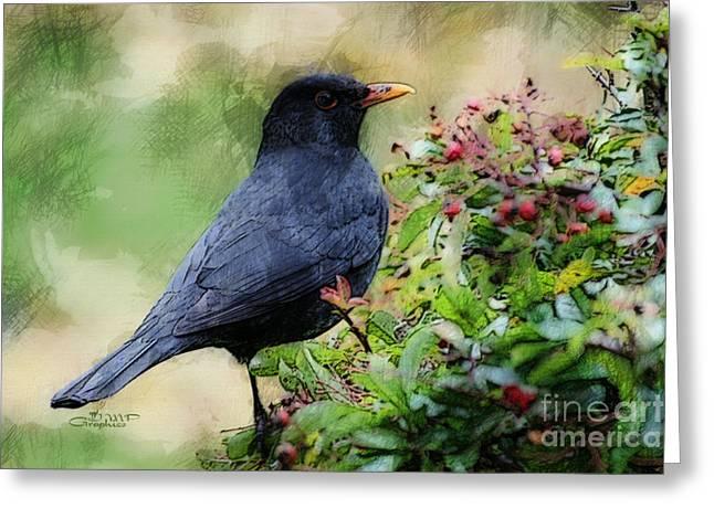 Birds. Thorns Greeting Cards - Hungry Blackbird Greeting Card by Jutta Maria Pusl