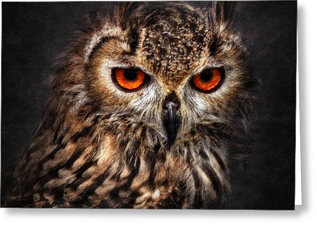 Image Pyrography Greeting Cards - Hunting Eyes Greeting Card by Ian David Soar