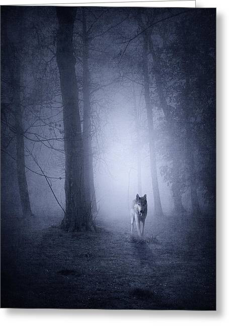 Recently Sold -  - Surreal Landscape Greeting Cards - Hunting Wolf Greeting Card by Svetlana Sewell