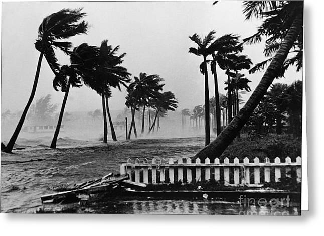 Flooding Greeting Cards - Hurricane In Palm Beach Greeting Card by Omikron