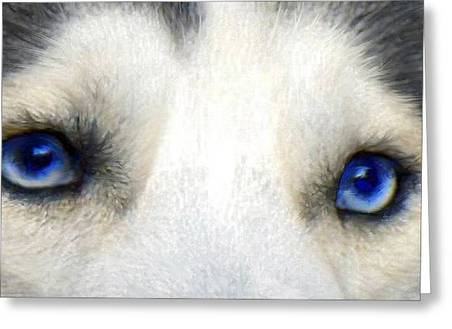husky eyes Greeting Card by Jane Schnetlage