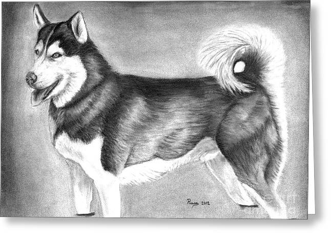 Husky Drawings Greeting Cards - Husky  Greeting Card by Russ  Smith