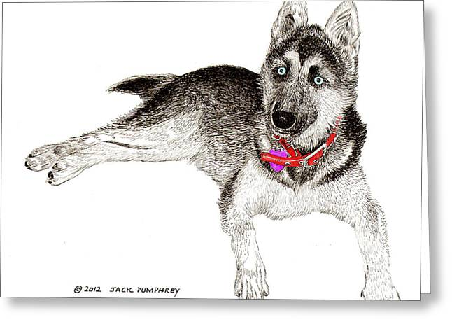 Husky with blue eyes and red collar Greeting Card by Jack Pumphrey