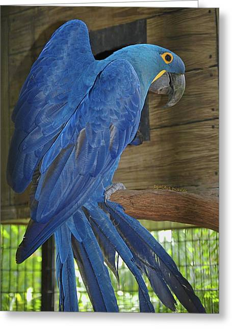 Hyacinth Macaw Greeting Cards - Hyacinth Sheen Greeting Card by DigiArt Diaries by Vicky B Fuller
