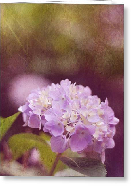 Purple Hydrangeas Greeting Cards - Hydrangea Greeting Card by Amy Tyler