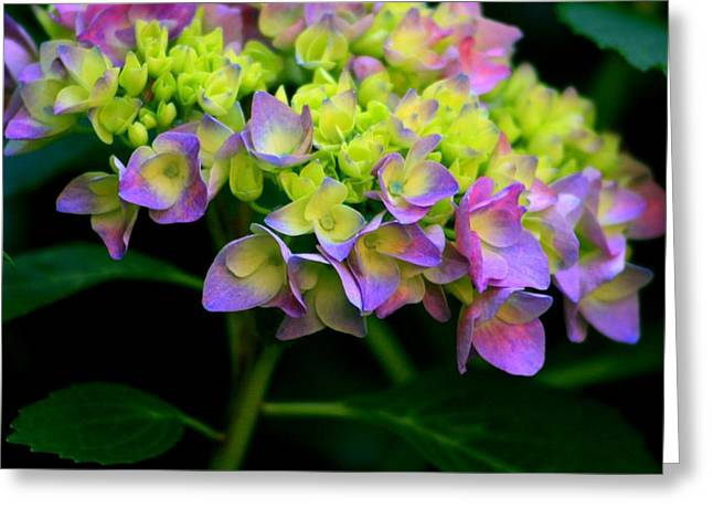 In Bloom Pyrography Greeting Cards - Hydrangea Beauty Greeting Card by Valia Bradshaw