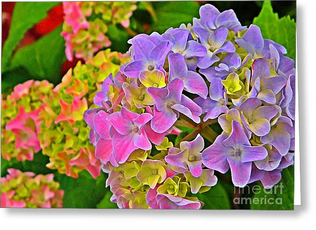 Yearly Greeting Cards - Hydrangea Blossoms   Greeting Card by Chris Berry
