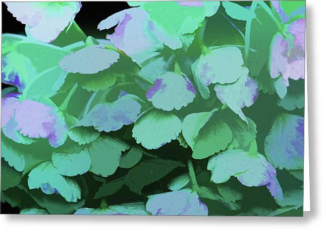 Soft Light Mixed Media Greeting Cards - Hydrangea  Greeting Card by Bonnie Bruno