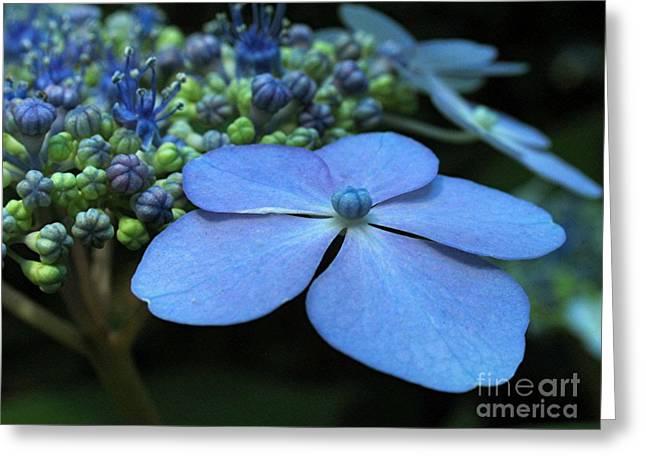 Purple Hydrangeas Greeting Cards - Hydrangea Greeting Card by Juergen Roth