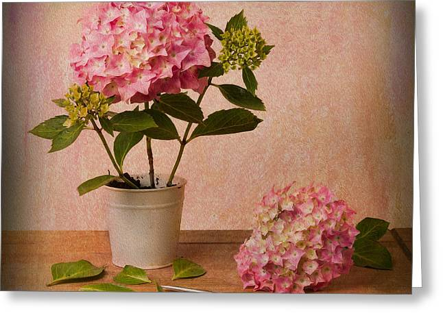 Scissors Greeting Cards - Hydrangea Pink Flower Greeting Card by Ian Barber