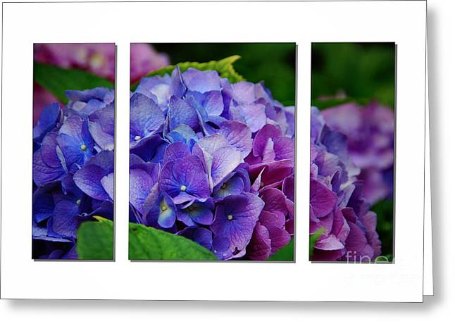 Lnature Greeting Cards - Hydrangea Shades of Blue and Pink Greeting Card by Elaine Manley