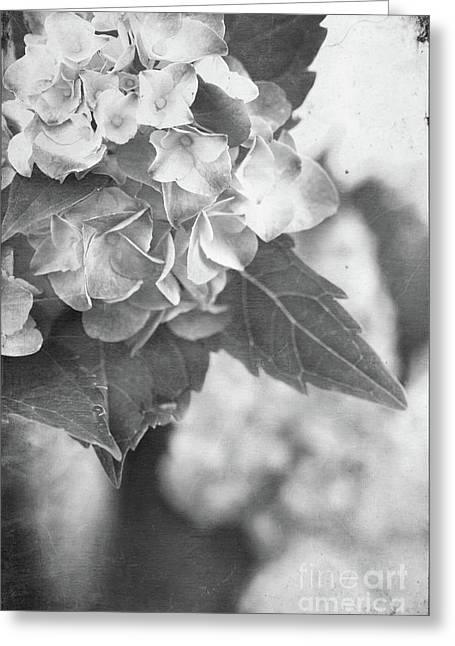 Worn In Greeting Cards - Hydrangeas in Black and White Greeting Card by Stephanie Frey