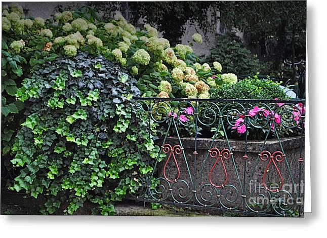 Hydrangeas Salzburg Greeting Card by Mary Machare