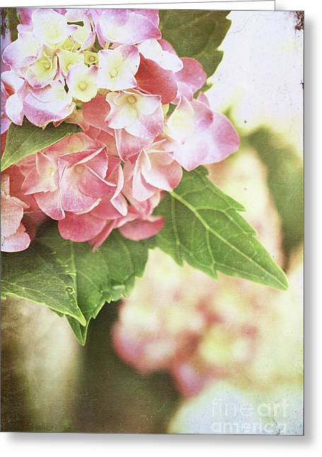Worn In Greeting Cards - Hydrangeas Greeting Card by Stephanie Frey