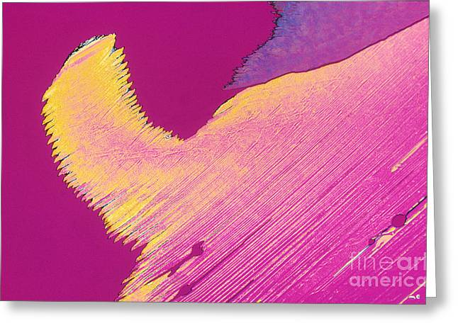 Cortisol Greeting Cards - Hydrocortisone Lm Greeting Card by Michael W. Davidson