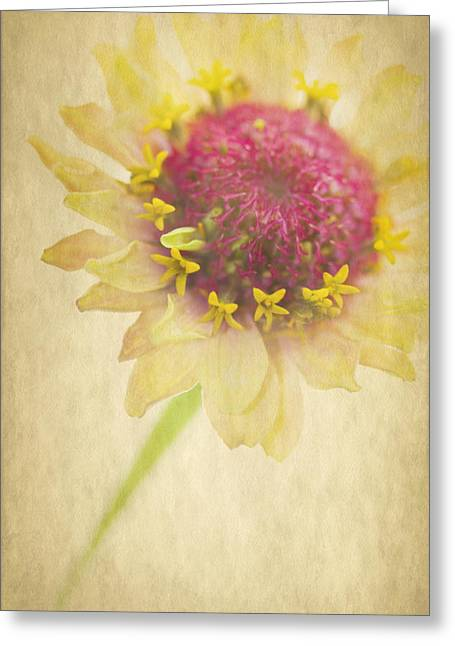 Texture Flower Greeting Cards - I Am A Star Greeting Card by Rebecca Cozart
