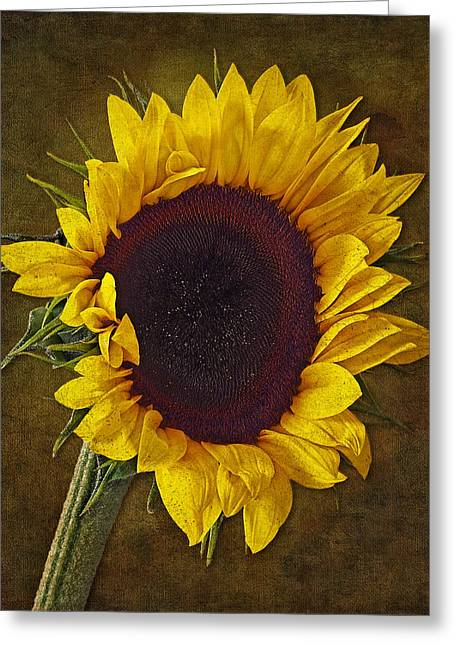 Petals Greeting Cards - I Dance With The Sun Greeting Card by Susan Candelario