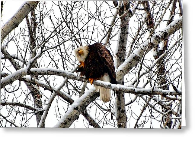 West Fork Greeting Cards - I dont care whos watching Greeting Card by Don Mann