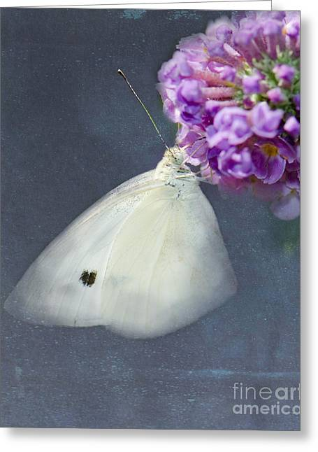 Cabbage White Butterfly Greeting Cards - I Dream of a White Butterfly Greeting Card by Betty LaRue