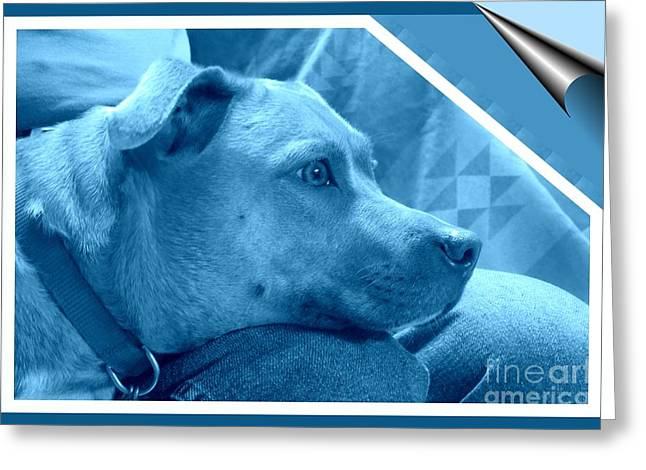 Apbt Greeting Cards - I Feel Blue Greeting Card by Renee Trenholm