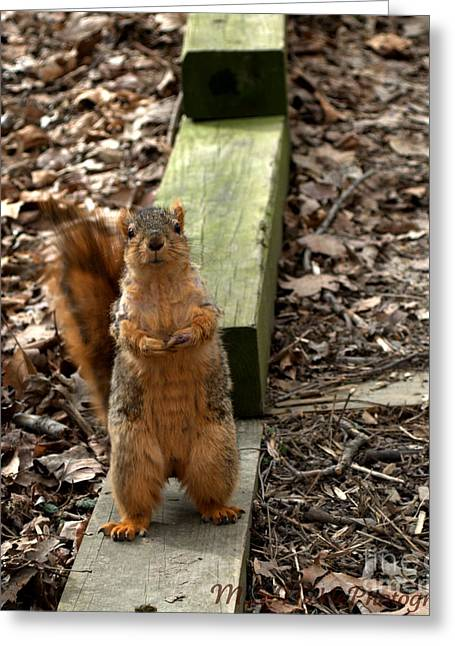 Phot Greeting Cards - I pose for food Greeting Card by Melissa Nickle