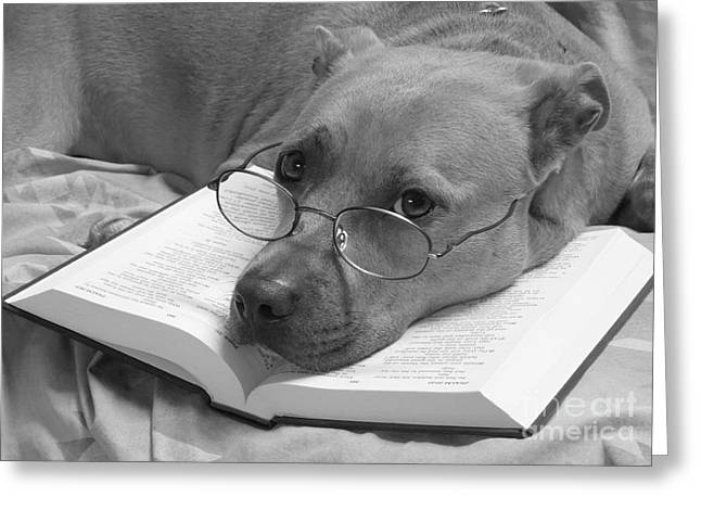 Apbt Greeting Cards - I Read My Bible Every Day . BW Greeting Card by Renee Trenholm
