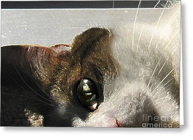 Photos Of Cats Digital Greeting Cards - I See You Greeting Card by Dale   Ford