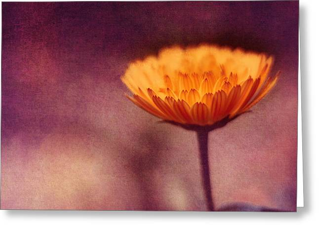 Textured Floral Mixed Media Greeting Cards - I Stand Greeting Card by Joel Olives