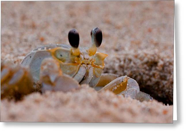 Fiddler Crab Greeting Cards - I Think I Caught a Keeper Greeting Card by David Hahn