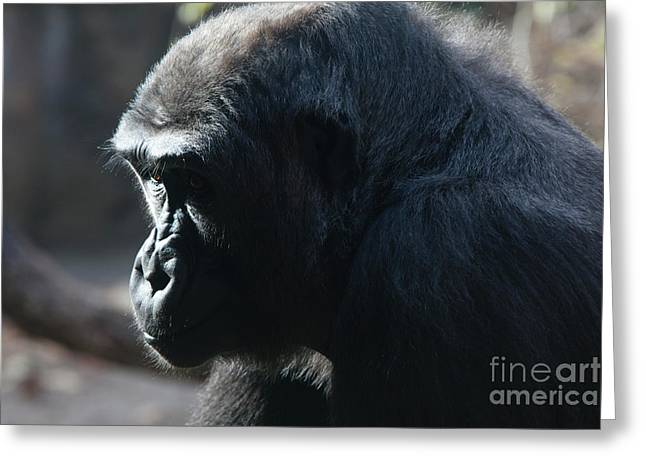"""animal Photographs"" Greeting Cards - I think therfore I am Greeting Card by Keith Kapple"