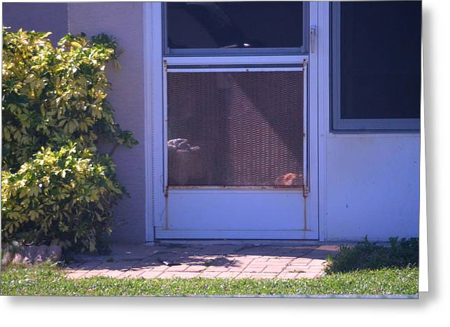 Screen Doors Greeting Cards - I Want Out Greeting Card by Ronald T Williams