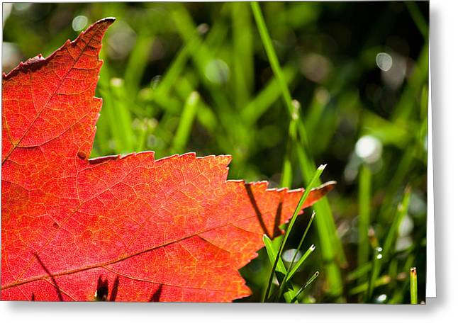 Fall Foliage Photographs Greeting Cards - I Wish You Could Stay A While Longer Greeting Card by Daniel Chen