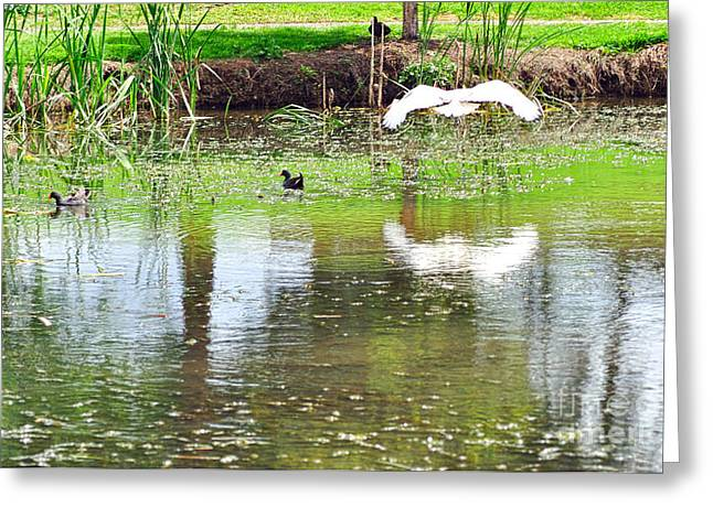 Ibis Greeting Cards - Ibis over his Reflection Greeting Card by Kaye Menner